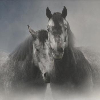 "Zirgu fanu klubs ""Īriss"""