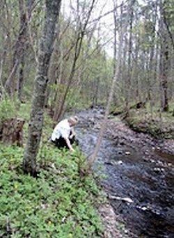 Karikstes upe