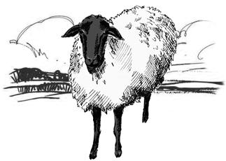 Zvaigžņu aitas